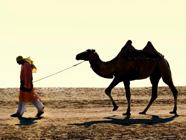 camello-señor