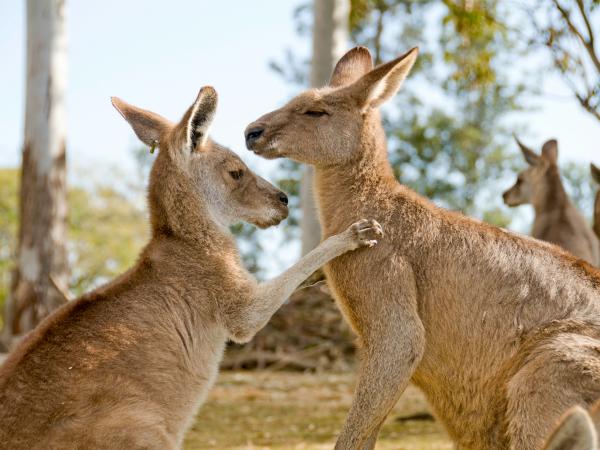 canguros-abrazo