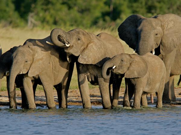 manada-elefante-africano