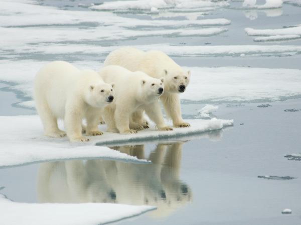 oso-polar