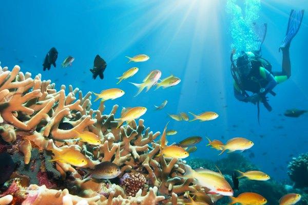 curioso Deportes acuáticos
