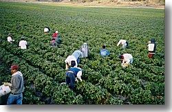 agricultura ganadería y pesca en España