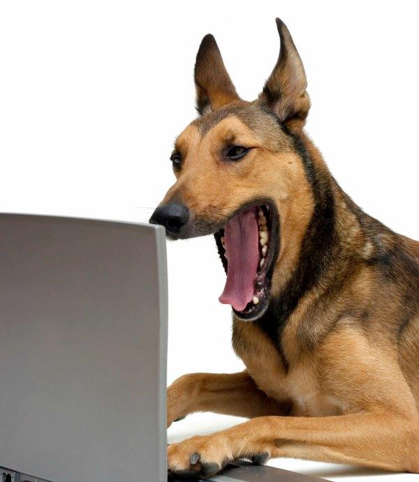 perro con ordenador